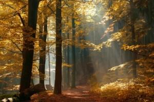 tree spotlight