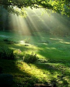 light-through-trees