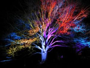 Audubon-tree