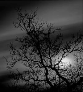 prvCreepy Tree